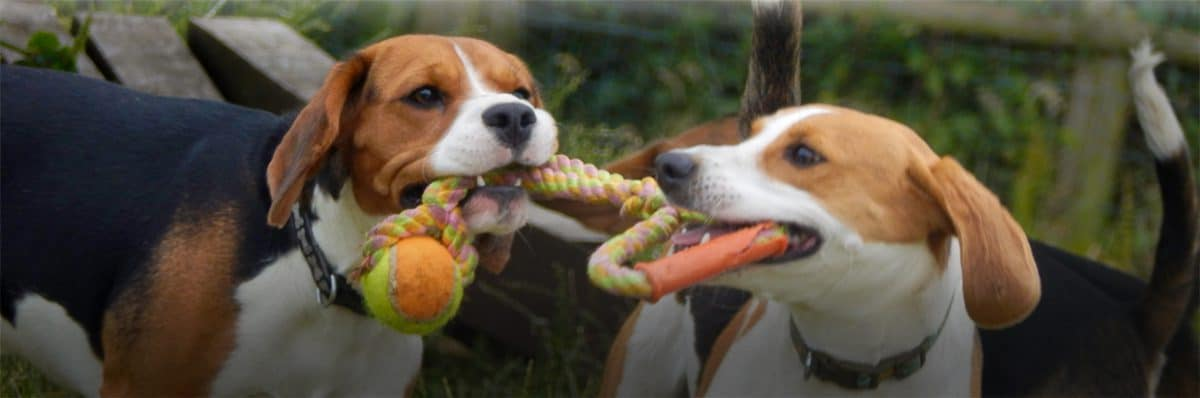 beagle-welfare-home-slider