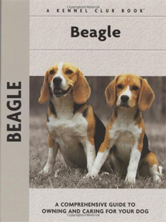 Beagle as pets