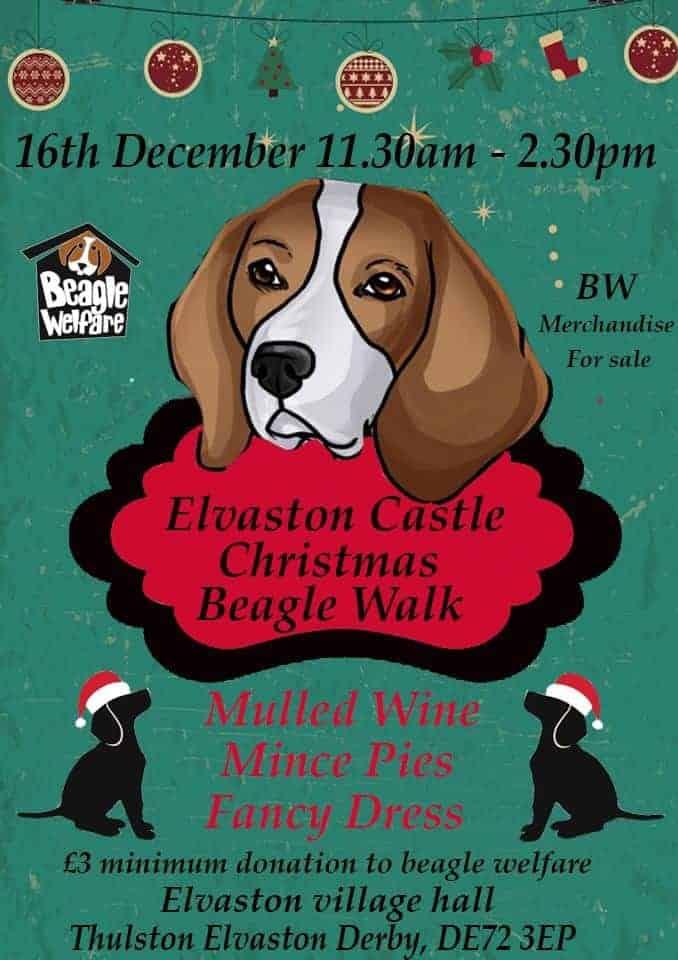 Elvaston Castle Beagle walk