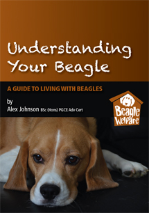 Understanding your Beagle