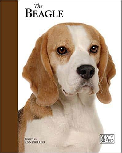 The Beagle by Anne Phillips