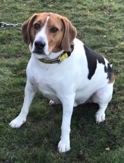Home - Beagle Welfare